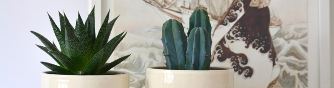 Ghiveci teracota sau un vas ceramic? Ce să fie?